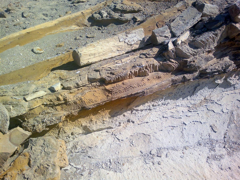 Imágenes de Ocucaje y sus restos fósiles